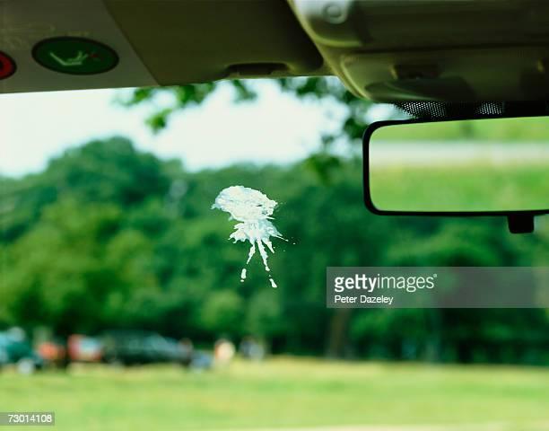Bird poo on car windscreen