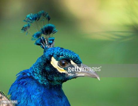 Bird Portrait : Stock Photo