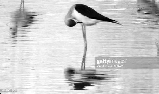 Bird reflecting on lake