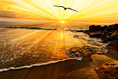Bird silhouette sunset is a single bird flying over the ocean water as sun rays burst forth from the sun in a vivid surreal colorful scenic seascape.
