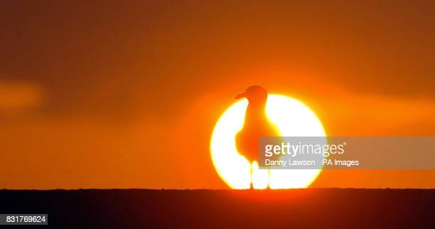 A bird silhouetted against the rising sun in Cellardyke Fife Thursday April 6 after samples from a dead swan found in the small coastal town tested...