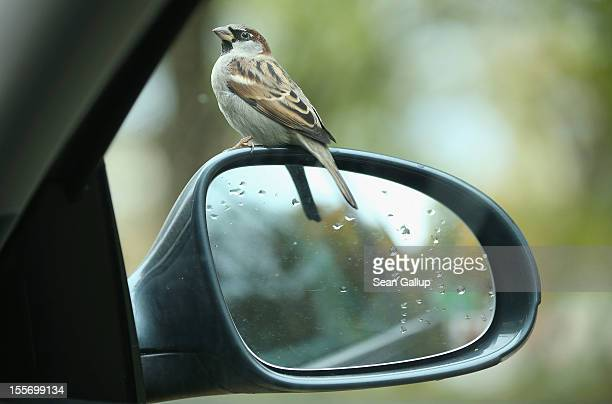 A bird sits on a car mirror on November 7 2012 in Berlin Germany