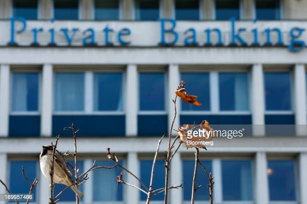 A bird sits on a tree outside the Lloyds TSB Private Banking offices part of Lloyds Banking Group Plc in Geneva Switzerland on Wednesday June 5 2013...