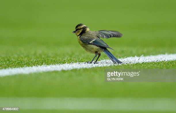 A bird sits on the court during Germany's Philipp Kohlschreiber and Serbia's Novak Djokovic men's singles first round match on day one of the 2015...