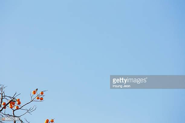 Bird Sitting on Permission Tree
