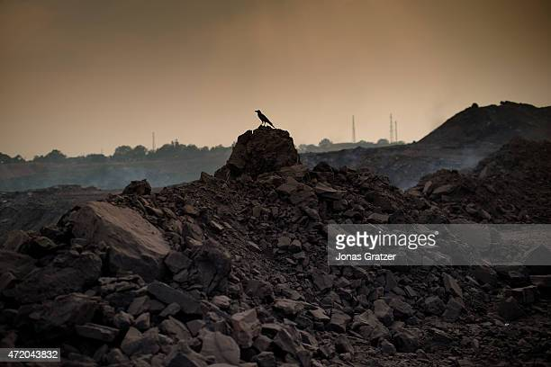 A bird sitting on top of a pile of coal and rocks at the Jharia coal mines Jharia in India's eastern Jharkand state is literally in flames This is...