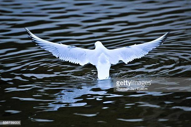 Bird Spreading Its Wings Over Rippled Lake