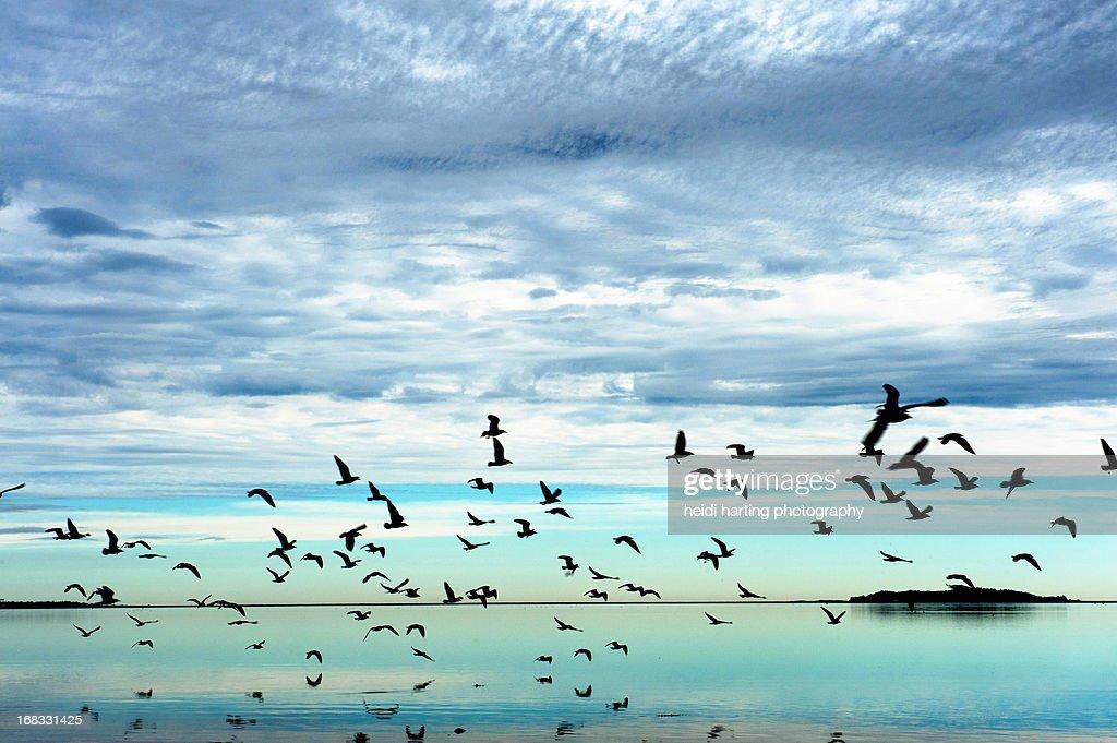 bird swarm at nelson beach, plymouth, ma