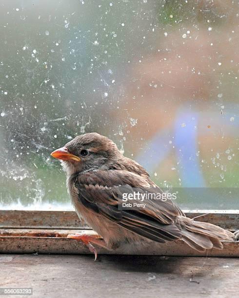 Bird trapped in window