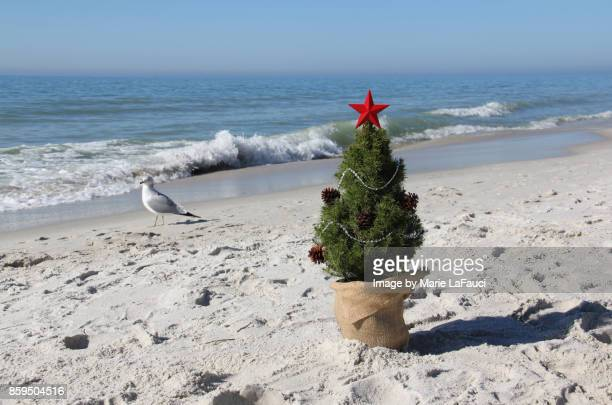 A bird walking by a Christmas tree on the beach