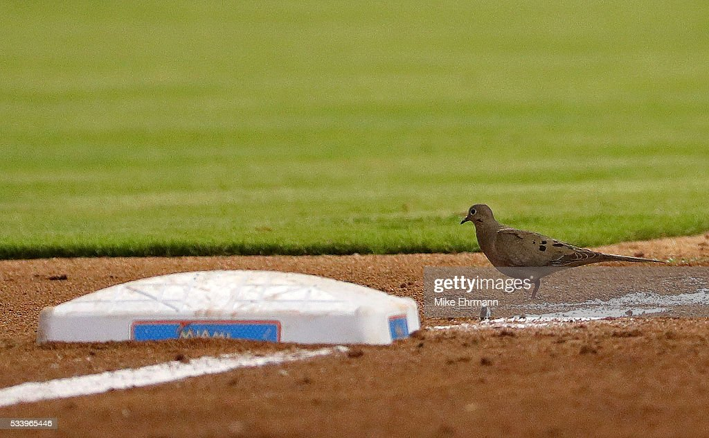 A bird walks across the field during a game between the Miami Marlins and the Tampa Bay Rays at Marlins Park on May 24, 2016 in Miami, Florida.