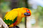 Bird yellow parrot with green wings and red head, funny bird,