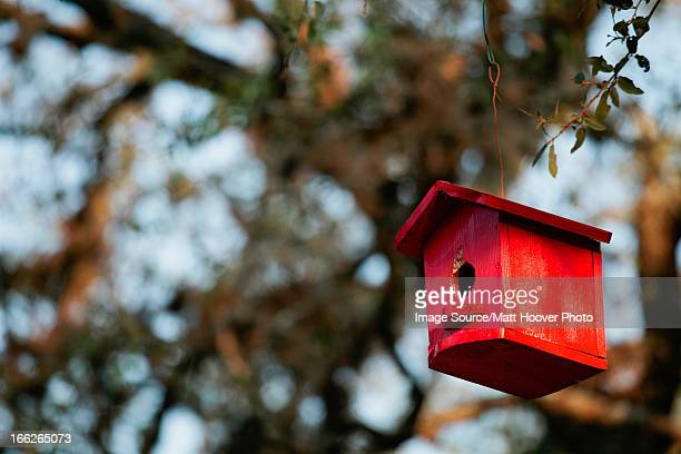 Birdhouse hanging from tree