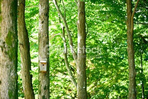 Casita de p jaros en el bosque foto de stock thinkstock - Casitas en el bosque ...