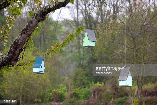 Birdhouses hanging from a tree
