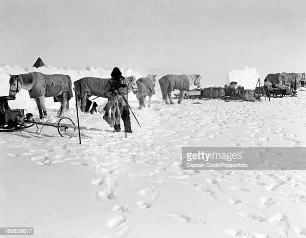 Birdie Bowers and ponies at Camp 15 on the Great Ice Barrier photographed during the last tragic voyage to Antarctica by Captain Robert Falcon Scott...