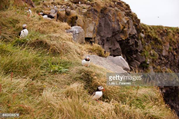 Birdlife at the cliffs