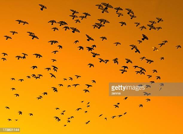 Birds Against An Orange Sky