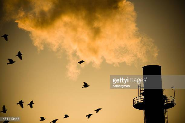 Birds and Smokestack