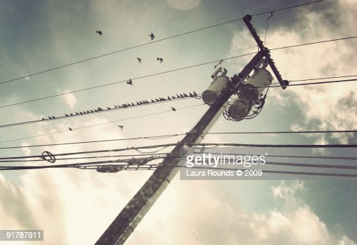 Birds and telephone wire