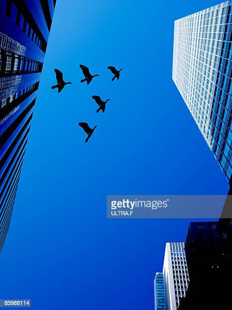 Birds are flying between buildings.