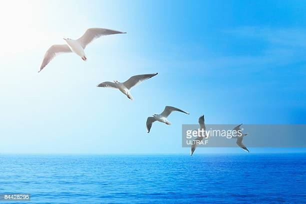 Birds are flying over the ocean.