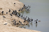 Birds are pictured near a strech of water on November 17 2012 in Hwange National Park in Zimbabwe AFP PHOTO MARTIN BUREAU