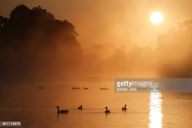 Birds are seen on the Round Pond as the sun rises at Kensington Gardens in London on August 31 2017 / AFP PHOTO / Daniel LEALOLIVAS