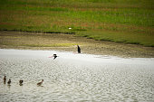 Birds At A Pond In A National Park
