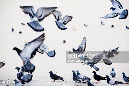 Birds at fly