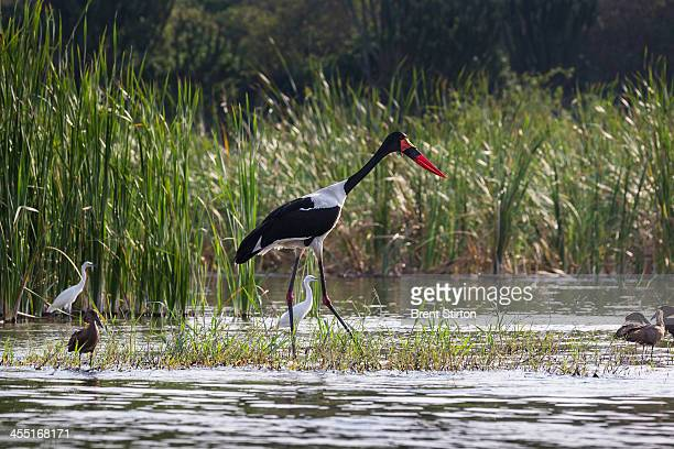 Birds close to the fishing village of Kavanyongi on the Northern shores of Lake Edward inside Virunga National Park DRC on August 9 2013 in...