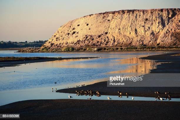 Birds Feeding on a Serene Beach