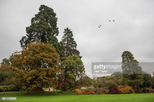 Birds fly above the trees at Wakehurst 30 years after The Great Storm devastated much of the botanic garden's landscape on October 14 2017 in...