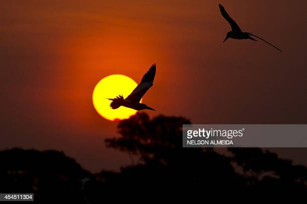 Birds fly at sunset over the Paraguay river in Caceres Brazil the gateway to the Pantanal on August 26 2014 Often referred to as the worlds largest...