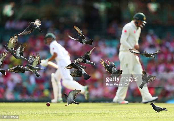 Birds fly away after Younis Khan of Pakistan played a shot during day three of the Third Test match between Australia and Pakistan at Sydney Cricket...