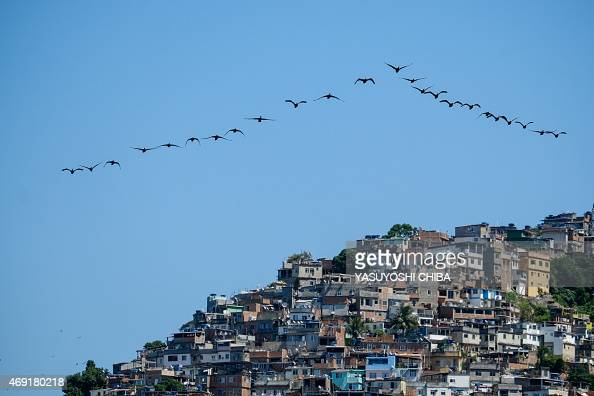 Birds fly in front of Vidigal shantytown near Lebron beach in Rio de Janeiro Brazil on April 10 2015 AFP PHOTO / YASUYOSHI CHIBA
