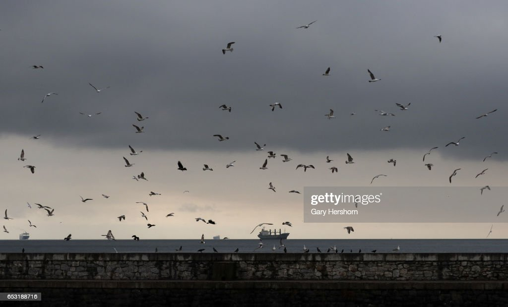Birds fly in the Bosphorus on March 13, 2017 in Istanbul, Turkey.