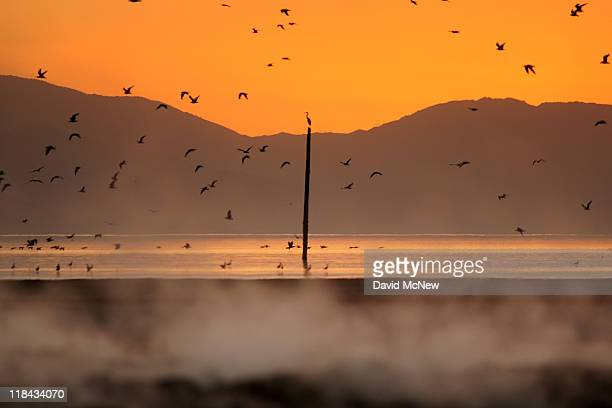 Birds fly in the distance behind steam vents that until recently were underwater on the floor of the Salton Sea on June 30 near Calipatria California...