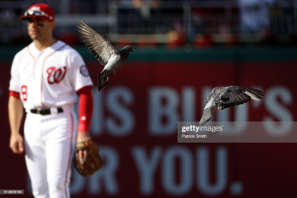 Birds fly on the field while Danny Espinosa #8 of the Washington Nationals looks on against the Los Angeles Dodgers in the seventh inning during game two of the National League Division Series at Nationals Park on October 9, 2016 in Washington, DC.
