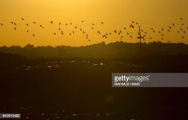 TOPSHOT birds fly over a garbage dump in Beit Lahia in the northern Gaza strip on February 19 2017 / AFP / MAHMUD HAMS