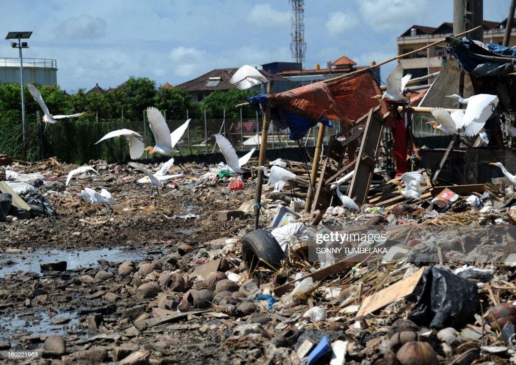 Birds fly over a garbage dump in Denpasar on the island of Bali on January 28, 2013. AFP PHOTO/Sonny TUMBELAKA