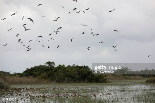 Birds fly over a mangrove during an airboat tour with a Soul River youth group at the Arthur R Marshall Loxahatchee National Wildlife Refugee in...