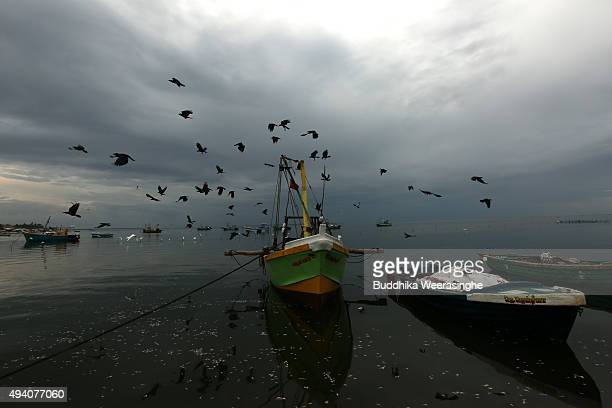 Birds fly over the fishing boats at Gurunagar fishing port on October 24 2015 in Jaffna Sri Lanka Sri Lankan Prime Minister Ranil Wickremesinghe...