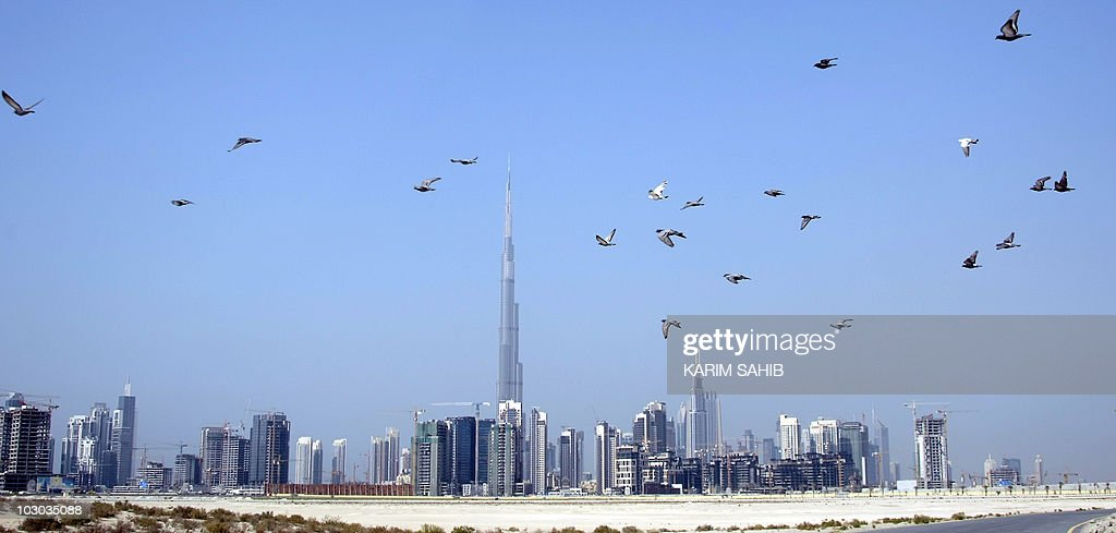 Birds fly past skyscrapers and Burj Dubai the world's tallest manmade structure under construction in the Gulf emirate of Dubai on November 27 2009...