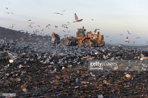 Birds fly while a bulldozer moves garbage in a landfill cell at the Melbourne Regional Landfill site operated by Cleanaway Waste Management Ltd in...