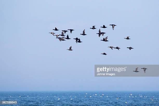 Birds flying above sky