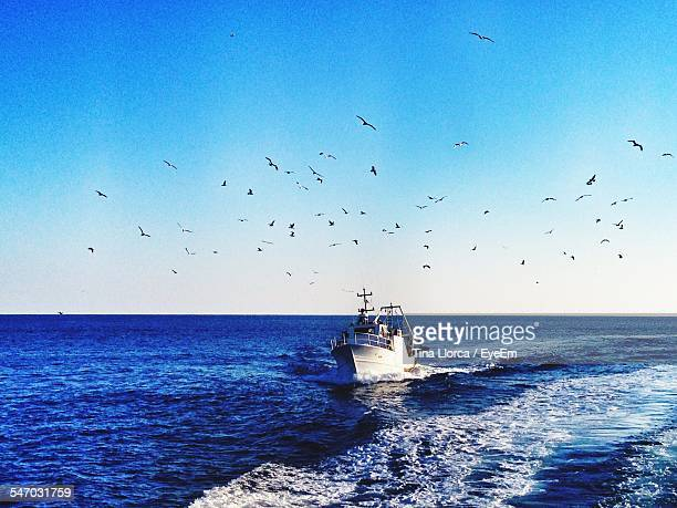 Birds Flying Above Trawler In Sea