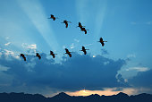 Bright sky on sunset or sunrise with flying birds natural background environment or ecology concept