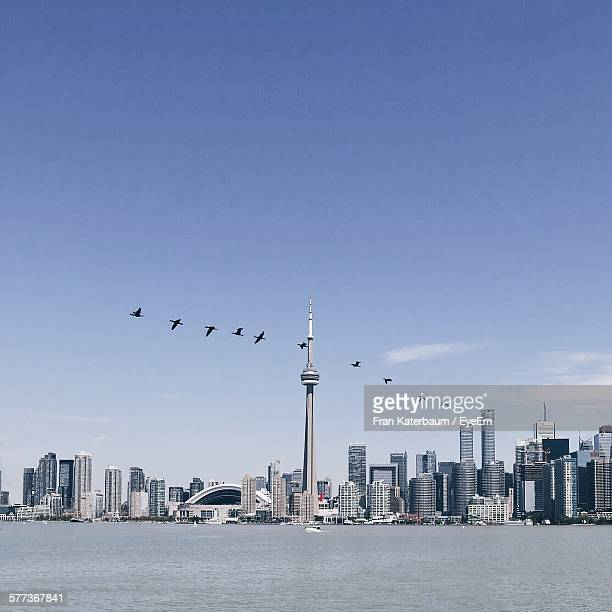 Birds Flying By Cn Tower Against Sky