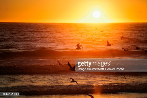 Birds flying over beach at sunset